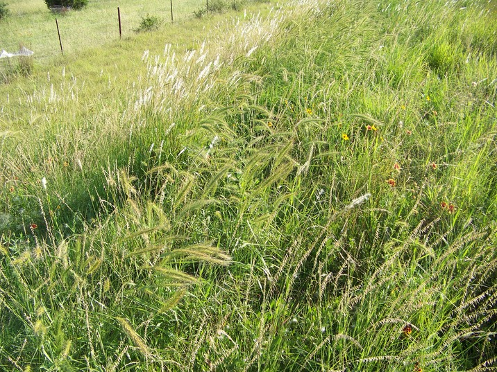 thickgrass2
