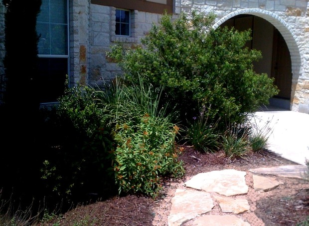 Problem poor drainage solution rain garden for Poor drainage solutions